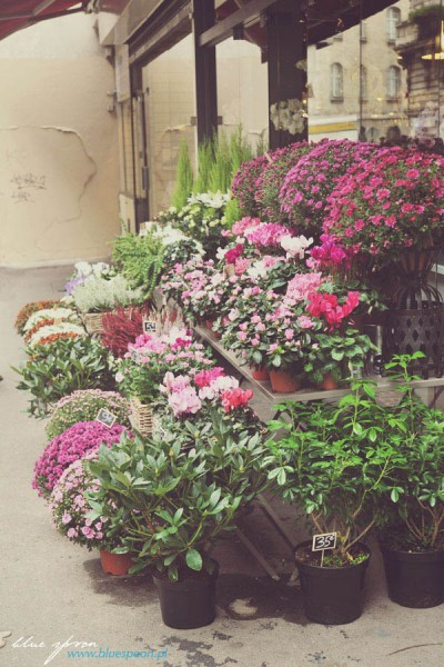 kwiaciarnia w Paryzu